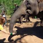 Elephant Sanctuary in Myanmar.