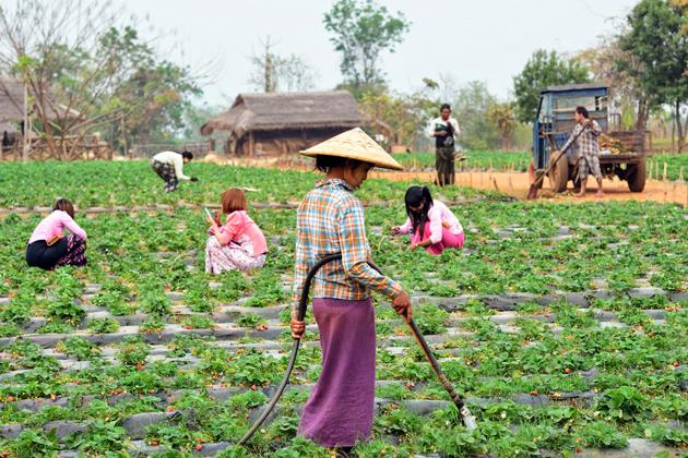 Pyin Oo Lwin, Maymyo - The temperate area in Myanmar