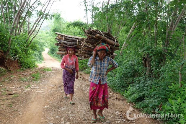 Burmese ladies taking wood to home from jungle