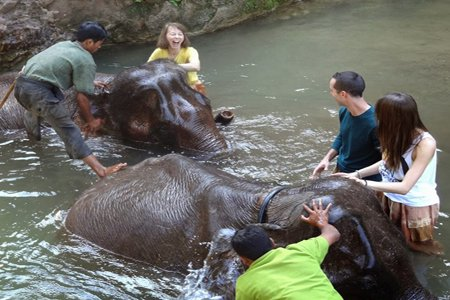 Elephant Sanctuary in Myanmar.