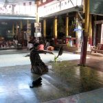 The cats that live here earn their keep by jumping for food in Ngaphechaung Monastery.