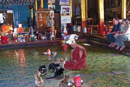 Visitors exciting watching Jumping Cat in Ngaphechaung Monastery.