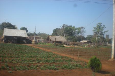 Local strawberry farm in Pyin Oo Lwin