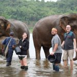 bathing the elephant on the river