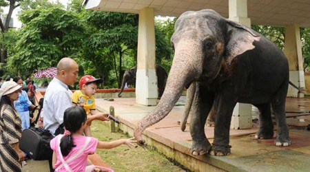 Visitors can feed elephants at Zoo