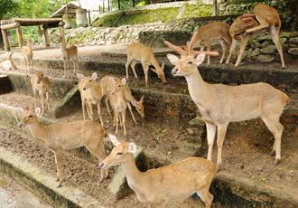 Zoological Garden Yangon Myanmar2