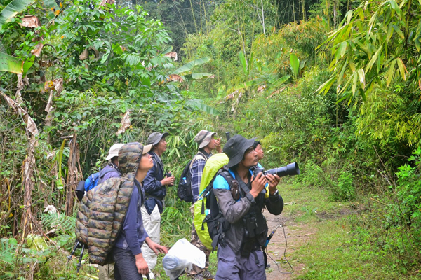Bird watching in Myanmar