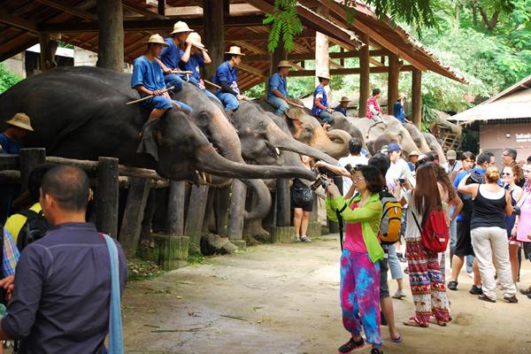 Elephant Camps in Myanmar