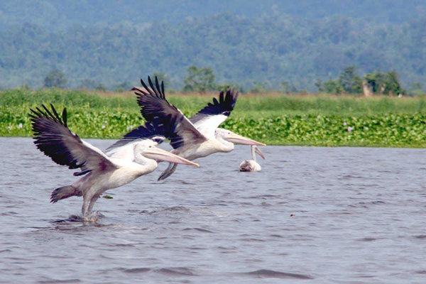 Indawgyi Lake Wildlife Sanctuary