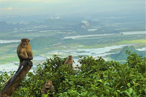 Monkeys in Mount Zwegabin
