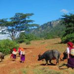 Encounter local tribes in Inle Lake