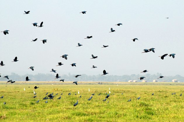 Many species of birds living together in Moeyungyi Wetland Wildlife Sanctuary