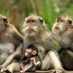 Hlawga Wildlife Park
