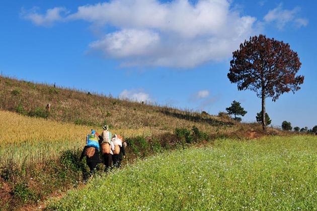 Pindaya Trekking