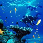 Adventurous Hiking and Scuba Diving