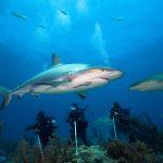 Shark Cave Diving Myanmar