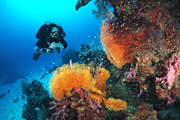 Diving in Myeik Archipelago