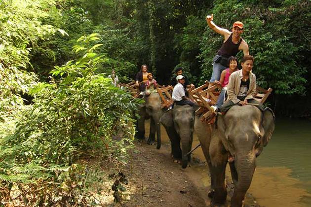 Myanmar Elephant Camp