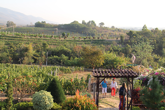 Grape gardens in Red Wine Mountain Myanmar