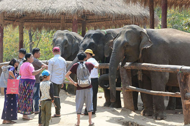 Visit the elephant camp - thing to do for amazing Myanmar ecotourism