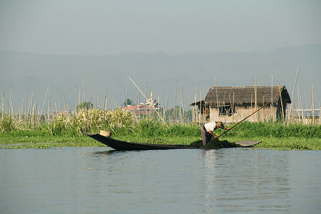 an Inle lake farmer working on his garden