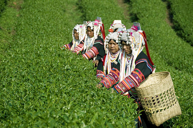 tribal women in Kyaing Tong is working on the hill
