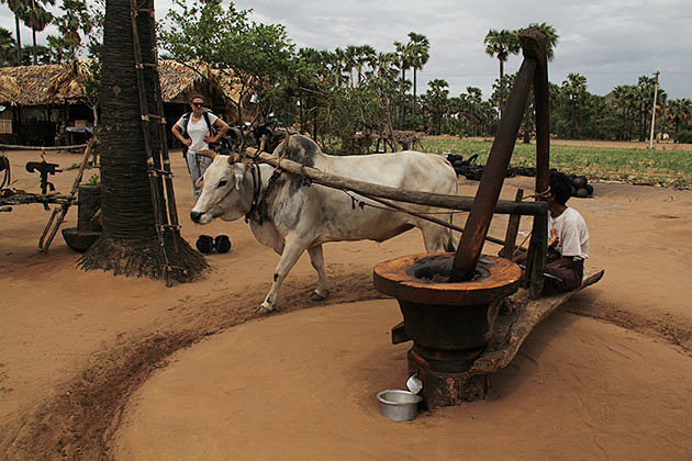 visit some families in the village in Bagan to have an interesting meet with the rural dwellers
