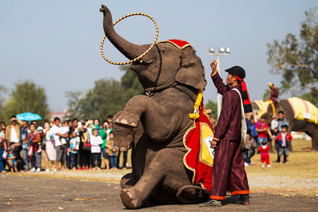 Attend the Dummy-Elephant-Festival when traveling to mandalay is an interesting