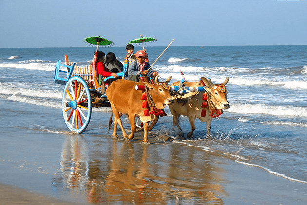 Ride-on-an-ox-cart-in Myanmar beach tour