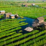 floating gardens in inle lake