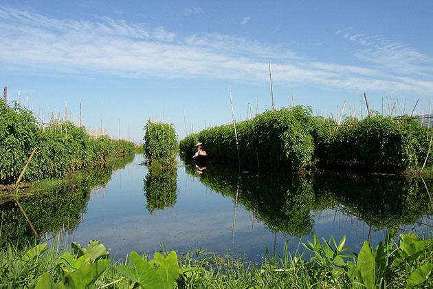 inle lake floating gardens