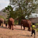 visit elephant logging camp