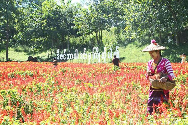 farmers on the flower