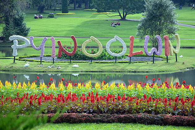 Pyin Oo Lwin to Hold the Flower Festival in December