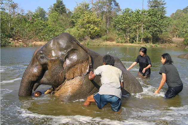 Ngwesaung Elephant Camp - Highlight of Myanmar beach vacation